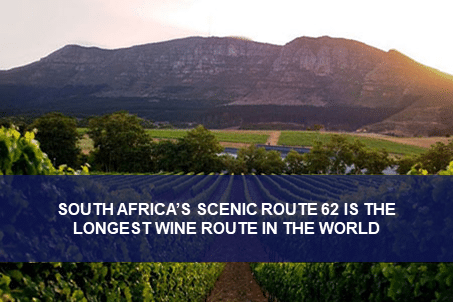Route 62: The World's Longest Wine Route
