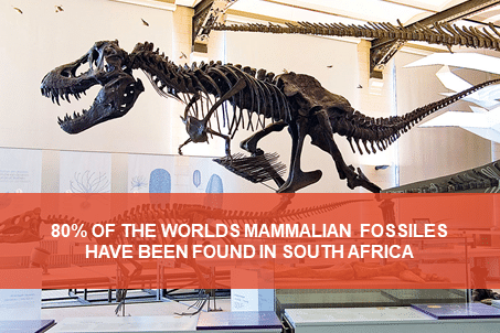 Searching for dinosaurs and fossils in South Africa